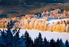 Winter Gold (bjorbrei) Tags: winter snow frost lake ice shore forest hills trees spruces countryside farm field sander maridalen oslo norway