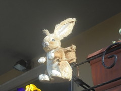 053 (en-ri) Tags: coniglietto little rabbit marrone pupazzino sony sonysti