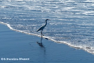 A visitor on the dividing line, Sunzal Beach, El Salvador