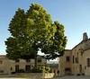 Arbol en la plaza (albertggr) Tags: pedraza segovia españa spain plaza verde colores naturaleza nature tree place green colours