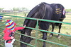2016_SPEV_Potomac Hunt Race 13 (tapsadmin) Tags: taps tragedyassistanceprogramsforsurvivors specialevents potomachuntraces poolesville maryland horses race 2016 military outdoor horizontal klinger