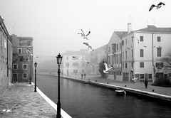 screaming in the morning (Blende1.8) Tags: venice venezia venedig morning mist dunst nebel seagulls möwen kanal canal water people street laterne laternen lantern outdoor italy italien italia menschen cityscape city urban life leben nikon d700 carstenheyer mono monochrome monochrom schwarzweiss black white blackwhite blackandwhite sw bw buildings gebäude fog foggy mood moody
