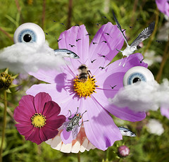 HELLO! (❦Air☿Walk❦) Tags: surrealism flower flowers eyes fly fish seagull bee ny fashion ultra cloud clouds absurd absurdus mindfuck art