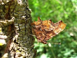 Butterfly 1576