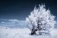 Lou Vernegue (Lolo_) Tags: infrared provence ir 715nm arbre vernegues 35mm