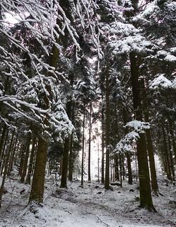 Schwarzwald oder Weißwald? / Black Forest or White Forest?