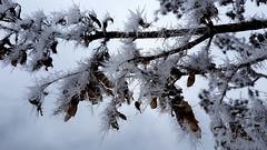 Nature cristallisée (YVDB7) Tags: cristaux neige glace nature branche