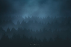 Nightwispher (Mimadeo) Tags: night forest mountain mystery fog tree trees moonlight scenic woods landscape wilderness mist misty monochrome toned blue pine pines dark shadow carpathian carpathians black spooky mood moody evening copyspace darkness rain rainy fear creepy mysterious gloomy gothic foggy norway norwegian cold scary distant