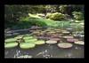 Duke Gardens July 2015 9.17.37 PM (LaPajamas) Tags: nc flora dukegardens gardens