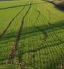 Waldspaziergang in Januar 17 (Matthias Ochs) Tags: waldspaziergangimjanuar green grün feld spuren landschaft landscape
