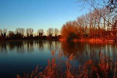 Evening light (Eddie Crutchley) Tags: europe england cheshire nature outdoor beauty sunlight simplysuperb landscape lake trees water blueskies greatphotographers