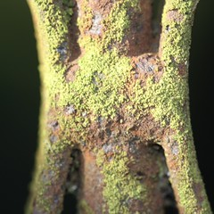 Nature (janano2010) Tags: mottled macro macromondays nature rust iron gate sunlight private