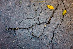 ... (Gabriel M.A.) Tags: fuji x100t rangefinder 35mm f2 feuilles leaves yellow jaune cracks asphalt naturamorta