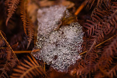 Defrost (andbog) Tags: sony alpha ilce a6000 sonya6000 mirrorless csc sonya manual vintagelens classiclenses mf manualfocus primelens sonyα emount sonyalpha italy italia it manualfocusing sony⍺6000 sonyilce6000 sonyalpha6000 ⍺6000 ilce6000 apsc sigma 90mm f28 90mmf28 sigma90mmf28macro macro closeup sigmalens nature natura naturallight leaves foglie piedmont collina to canavese ice ghiaccio snow neve