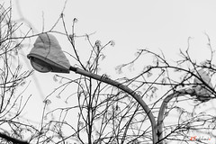 Snow Hat (Alexis2k) Tags: streetphoto streetphotofraphy streetlamps winter 70300mm tamron70300mm tamronsp70300mmf456divcusd tamronspaf70300mmf4056divcusd tamron bw blackandwhite