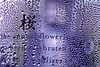 In A Bottle (Alfred Grupstra) Tags: macromondays inabottle drop wet rain liquid backgrounds abstract closeup macro raindrop water blue freshness pattern dew glassmaterial transparent condensation nature textured reflection