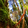 A Rainbow in the Forest (JulieK (thanks for 6 million views)) Tags: cobweb bokeh forest wood moss tinternwoods light iphonese 2018onephotoeachday wexford irish ireland beautiful nature