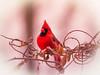 Red Male Cardinal (ildikoannable) Tags: red cardinal malecardinal redcardinal birdphotography olympus lumix winterbirding guelph arboretum