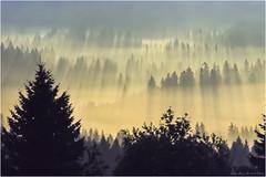 Schwarzwald 07.09.1979 (Bärenthal) (Dieter Meyer) Tags: schwarzwald bärenthal blackforest sonnenaufgang sunrise fog nebel wald bäume baum landschaft gegenlicht 1979 badenwürttemberg deutschland germany analog