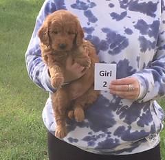 Sophie Girl 2 2-18