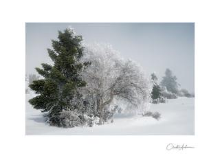 Winter, Mt. Helmos #10