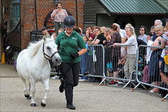Casper on Parade (meniscuslens) Tags: rda pony horse horses hounds heroes barricade fence crowd groom aylesbury charity retired buckinghamshire princes risborough