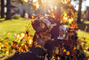 What to do when your motorcycle won't start? (hannolamiikka) Tags: motorcycle nature vintage rust old nikon nikkor d610 leaf summer sunshine sun sunlight