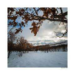 (david Ramalleira) Tags: davidramalleira davidramalleiraphotography d700 nature naturaleza natureart naturephotography naturesart natura naturesfinest nikon paisaje paisajes landscape landscapes nieve snow winter invierno guadalajara