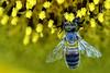 421_by_realmantis (Realmantis) Tags: animal bug closeup insect invertebrate macro nature