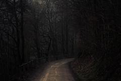 Under the Canopy (Netsrak) Tags: rursee eifel landschaft weg waldweg baum wald zaun
