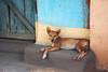 IMG_1730a (sensaos) Tags: india sensaos travel chhattisgarh 2013 asia