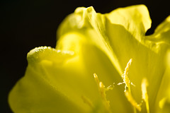 Pistil  (in explore) (Pyc Assaut) Tags: pyc5pyc pyc5pycphotography pycassaut nature naturel natural couleurs colors extérieur fleur flower floraison fleuri jardin garden pistil jaune yellow smile saturday smileonsaturday sunnyyellow sunny