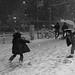 Snowball Battle in Tokyo