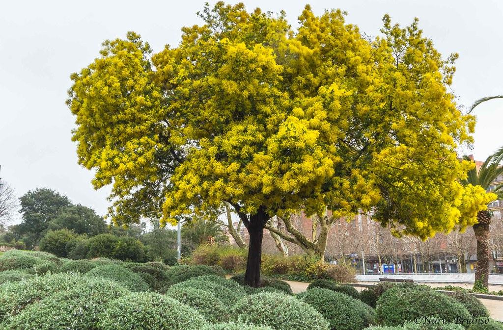 The Worlds Best Photos Of Acacia And Arbol Flickr Hive Mind