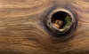 Knothole (kevinmoore57) Tags: knothole park state mathiessen