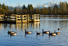 Mill Lake - Abbotsord, BC (SonjaPetersonPh♡tography) Tags: britishcolumbia canada abbotsford bc nikon nikond5300 nature scenic scenery viewpoints boardwalks water lake milllake milllakepark birds geese ducks bcparks park ice mtbaker mountbaker trails walking visitors fishing watersports