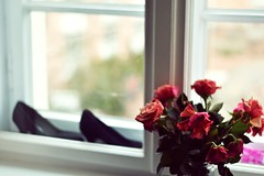 Let's live for today. (catarinae) Tags: love is all soul rose flowers fairtrade home sleeping room window berlin deutschland germany shoes pumps fade bokeh blurred lets live for today