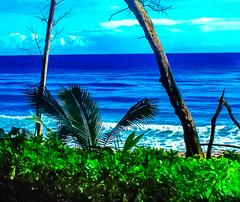 Hawaii-WaipioValley-27.jpg (Chris Finch Photography) Tags: jungle hawaiiphotography waipio taro waipiovalley hawaii landscapephotographs landscapephotography utahphotographer chrisfinch tarofarms chrisfinchphotography photographs bigisland tropical tarofarm wwwchrisfinchphotographycom valley