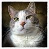 His Royal Highness (Timothy Valentine) Tags: 2018 home 0218 rainingcatsanddogs 52weeks cat quinnomannion eastbridgewater massachusetts unitedstates us