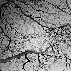 through the branches (my analog journey) Tags: sixtl tmax400 homedeveloped dilutionb hc110 cologne balon sky bnw branches blackwhite 35to220 movformatcom filler filisawesome filmshoter mediumformat filmdev:recipe=11794 kodaktmax400 kodakhc110 film:brand=kodak film:name=kodaktmax400 film:iso=400 developer:brand=kodak developer:name=kodakhc110