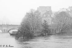 La pointe du Vert Galant  002 (letexierpatrick) Tags: seine paris france europe extérieur explore fleuve inondation crue noir blanc noirblanc blackandwhite black white bw nikon nikond7000 arbres
