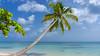 caribbean cliche (rey perezoso) Tags: 2016 samaná mar caribe hispaniola republicadominicana quisqueya palmtree palma horizon nature naturallight atlantic ocean caribbean cloud turquoise lasterrenas