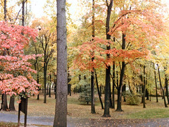Northern Virginia Forest (PDX Flyer) Tags: forest grass park tree orange autumn fall follage leaves calm peaceful relax relaxing bark