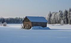 The beauty of winter (KaarinaT) Tags: kurikkalantie kalajoki winter finland winterwonderland beauty barn ostrobothnia wooden woodenbuilding snowcovered
