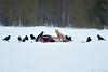 ¡Mírame cuando te hablo! (David Perez Lopez) Tags: zorro zorrocomún zorrorojo vulpesvulpes redfox finlandia kuhmo viiksimo nikon d4s 200400vrii