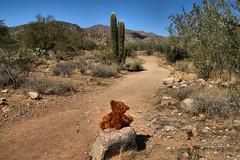 Wanderlust  09/52 (James Milstid) Tags: wanderlust teddybear trail 2018p52 hike whitetankmountain cactus