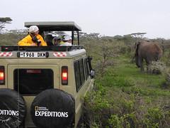 NGE car and bull elephant (David Bygott) Tags: nge car bull elephant africa tanzania natgeoexpeditions 180121 ngorongoro nca ndutu masek