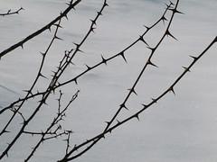 Stražar / Guard (Damijan P.) Tags: zima winter sneg snow slovenija slovenia prosenak