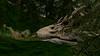 In the bone yard (Tevor Z) Tags: secondlife virtualart 3d flyingcoyoteriver flyingcoyote skull bone woods water trees green