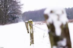Perspective (metsemakers) Tags: winter wei sneeuw landschap perspectief perspective snow leudal sony alpha a58 limburg holland thenetherlands nederland